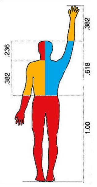 insan ve altin oran.png.jpg